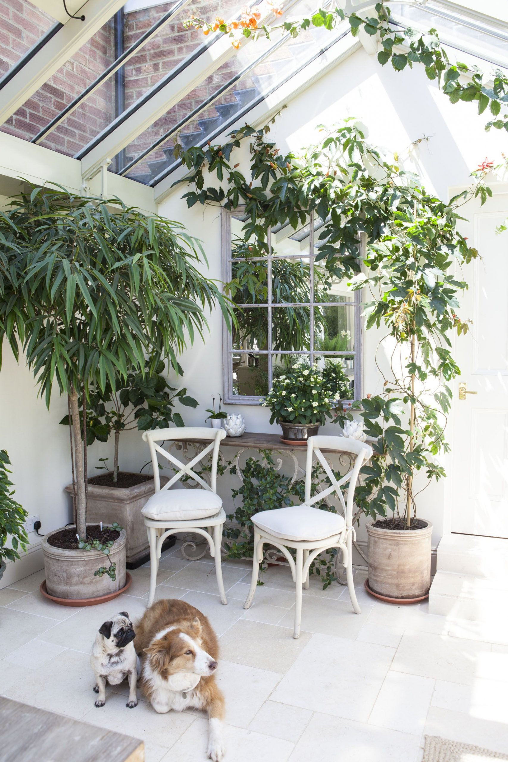 Plants - Small Conservatory Ideas for 2020